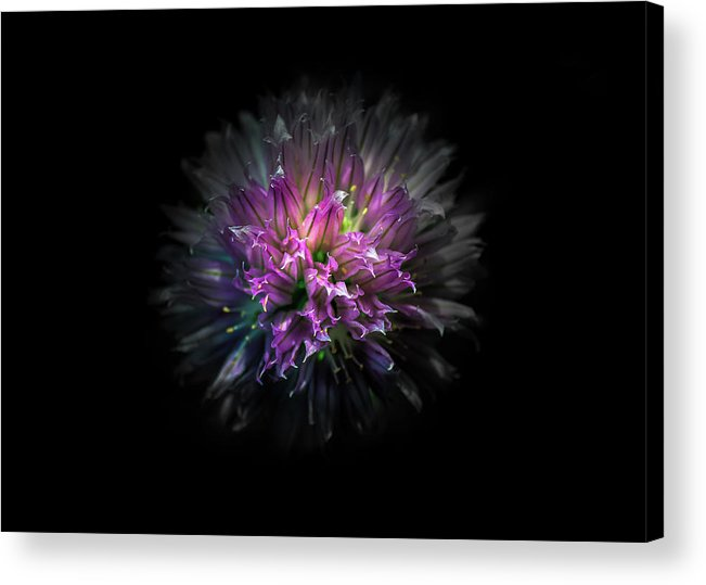 Brian Carson Acrylic Print featuring the photograph Backyard Flowers 53 Color Version by Brian Carson