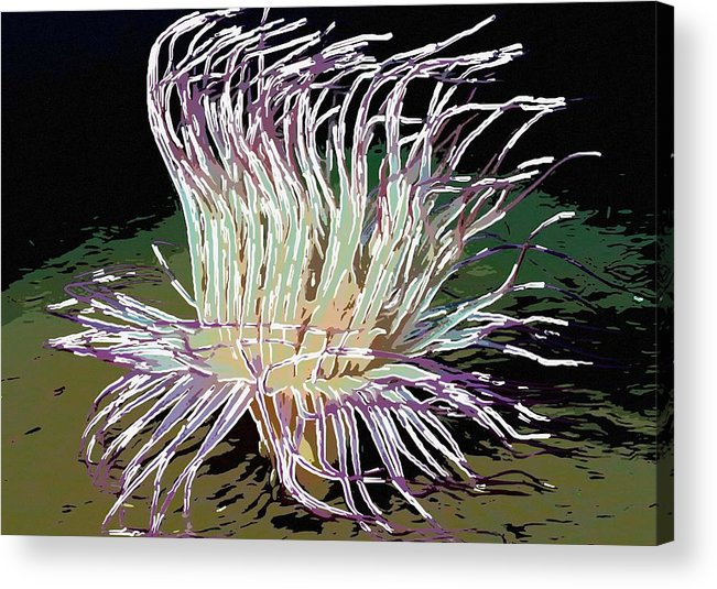 Starfish Acrylic Print featuring the painting Beautiful Sea Anemone 1 by Lanjee Chee