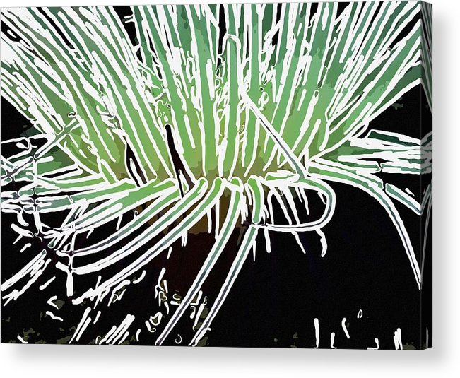 Starfish Acrylic Print featuring the painting Beautiful Sea Anemone 3 by Lanjee Chee