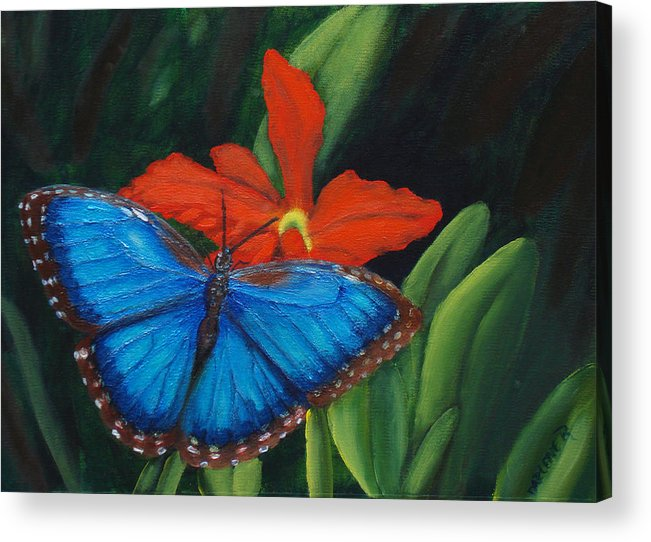 Butterfly Acrylic Print featuring the painting Blue Morph by Darlene Green