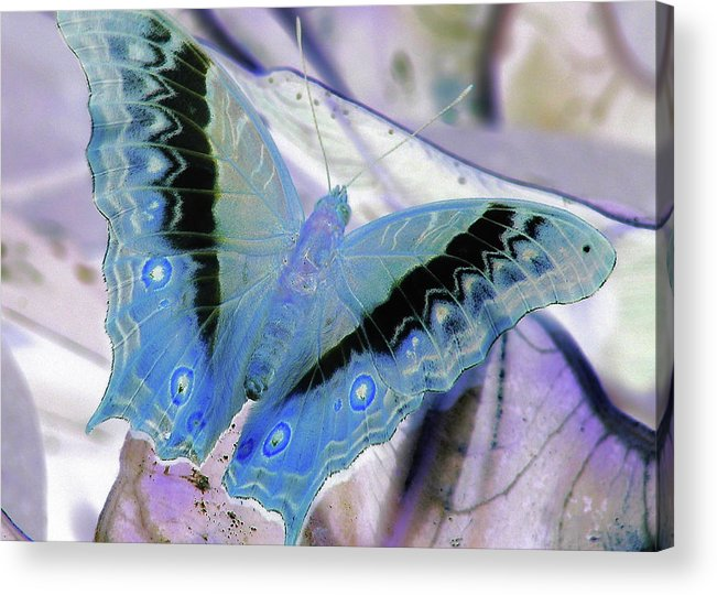 Butterfly Acrylic Print featuring the photograph Blue Negative by JAMART Photography