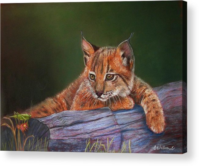 Iberian Lynx Acrylic Print featuring the painting Brisa by Ceci Watson