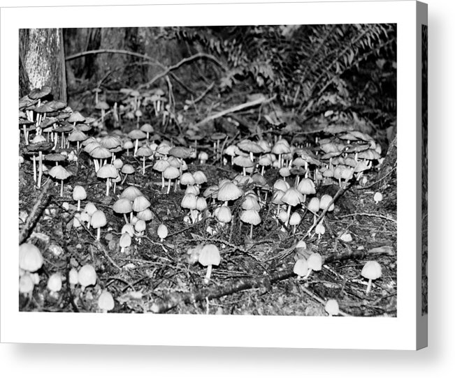 Black Acrylic Print featuring the photograph Caterpillars Playground 1 by J D Banks