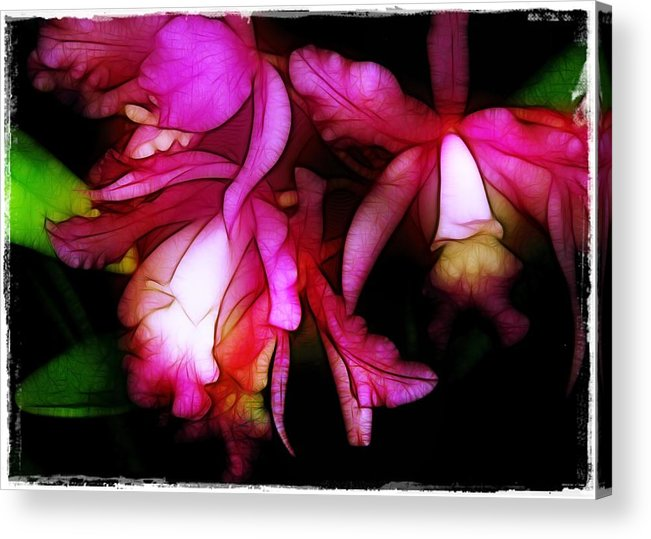 Orchids Acrylic Print featuring the photograph Cattleyas by Judi Bagwell