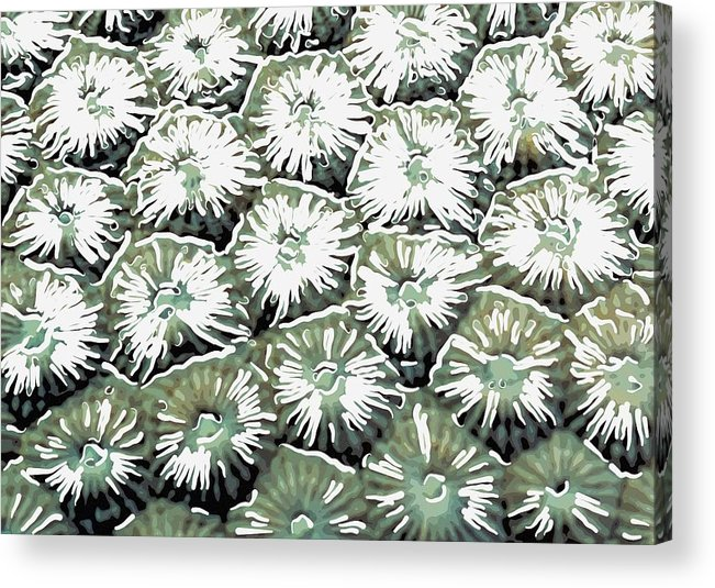 Starfish Acrylic Print featuring the painting Coral Close Up by Lanjee Chee