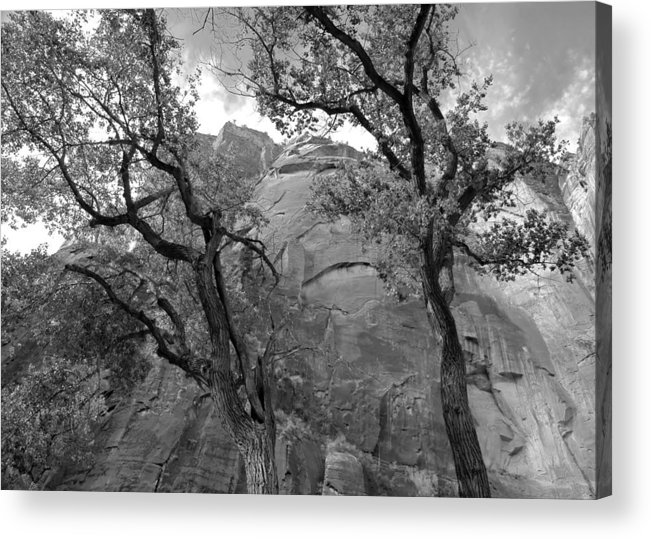Zion Acrylic Print featuring the photograph Cottonwood Trees-zion by Stephen Vecchiotti