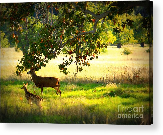 Deer Acrylic Print featuring the photograph Deer In Autumn Meadow - Digital Painting by Carol Groenen