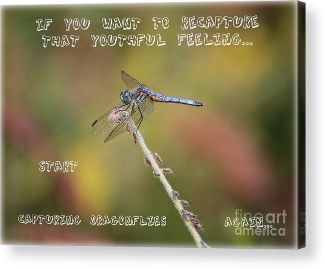 Dragonfly Art Acrylic Print featuring the photograph Feel Young Again by Carol Groenen