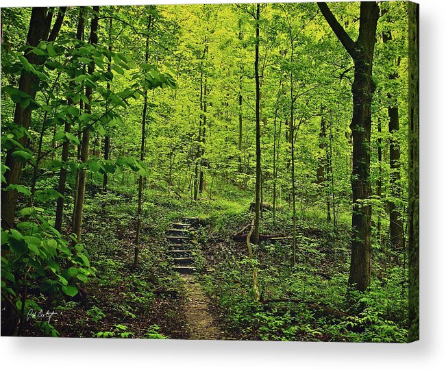 Canada Acrylic Print featuring the photograph Forest Stairs by Phill Doherty