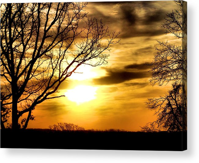 Nature Acrylic Print featuring the photograph Full Of Beauty by Karen Scovill