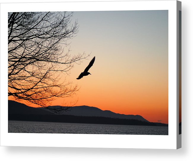 Seagull Acrylic Print featuring the photograph Glide by J D Banks