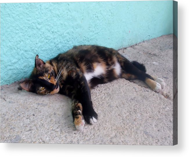 Cat Acrylic Print featuring the photograph Hemingway Cat by JAMART Photography