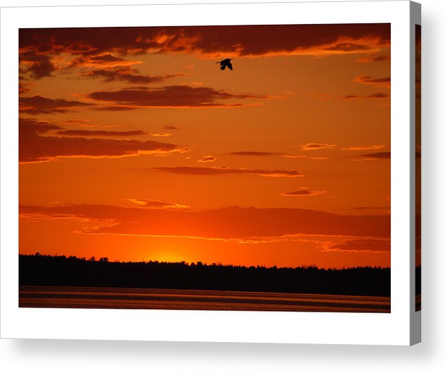 Sunset Acrylic Print featuring the photograph Heron Sunset by J D Banks