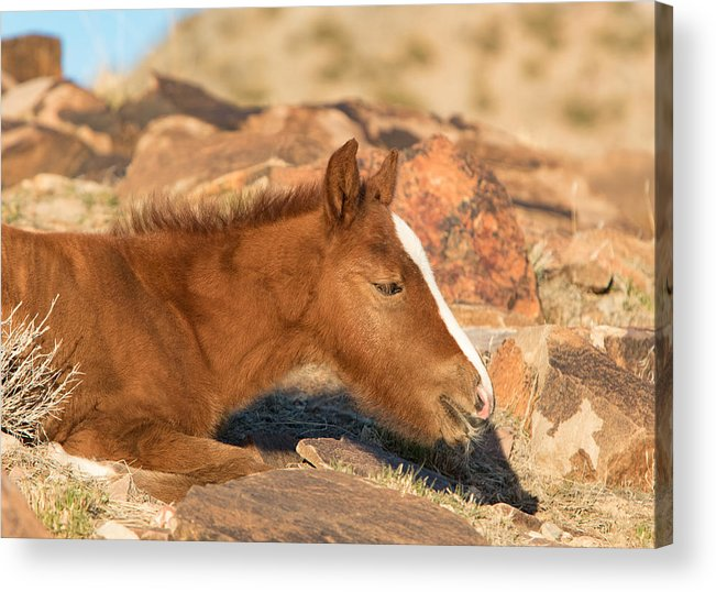 Horse Acrylic Print featuring the photograph Hiding In The Rocks by Kent Keller