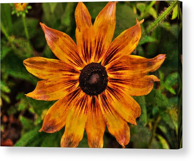 Flower Acrylic Print featuring the photograph Indian Summer by JAMART Photography