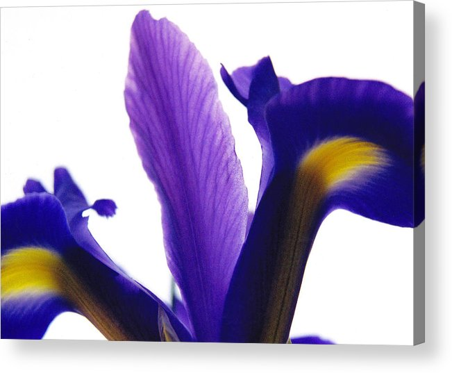 Iris Acrylic Print featuring the photograph Iris by Vah Pall