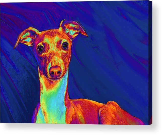 Greyhound Acrylic Print featuring the digital art Italian Greyhound by Jane Schnetlage