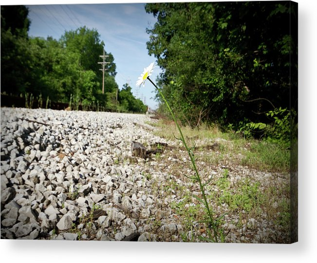 Train Tracks Acrylic Print featuring the photograph Lone Daisy by Tim Fitzwater