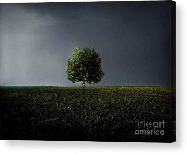 Blue Acrylic Print featuring the photograph Maybe This Year Will Be Better Than The Last by Dana DiPasquale