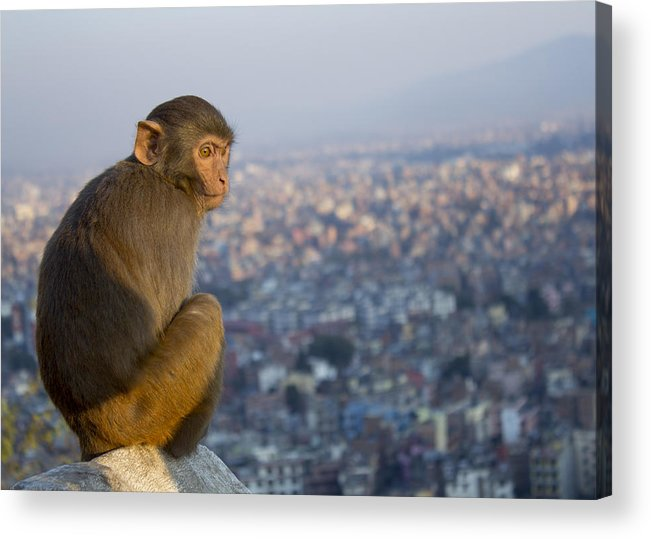 Animals Acrylic Print featuring the photograph Encroached by Corey Chimko