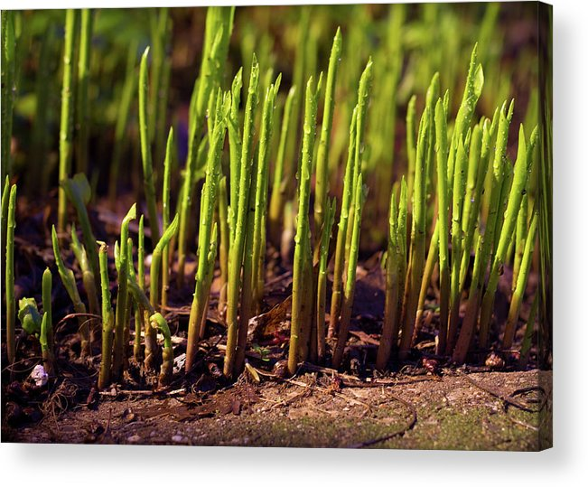 Night Acrylic Print featuring the photograph Night Growth by Tim Fitzwater