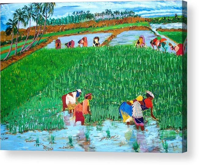 Paddy Acrylic Print featuring the painting Paddy Planters by Narayan Iyer