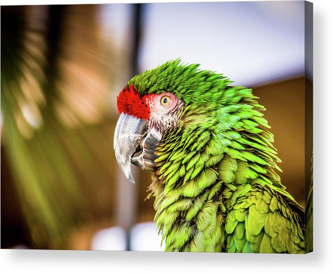 Animal Acrylic Print featuring the photograph Parrot 2 by Hyuntae Kim