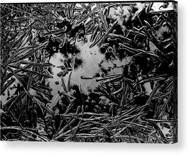 Pine Needles Acrylic Print featuring the photograph Pine Needle Rain by Michael L Kimble