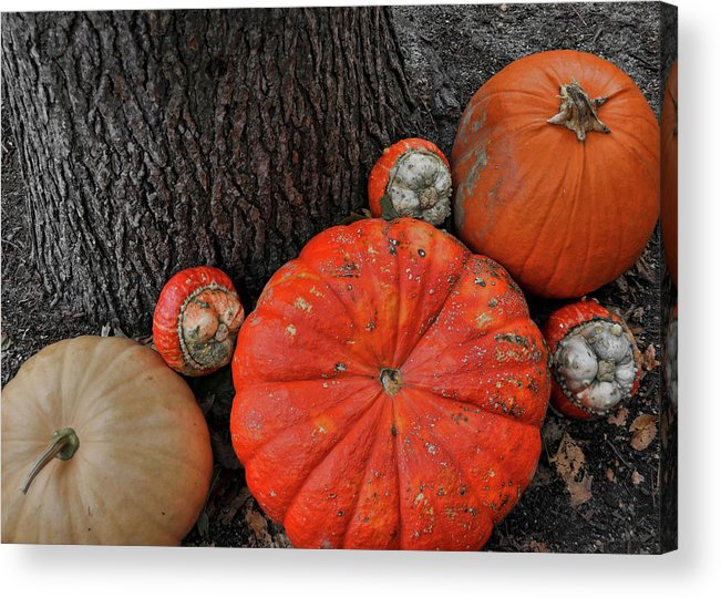 Pumpkin Acrylic Print featuring the photograph Red Orange by JAMART Photography
