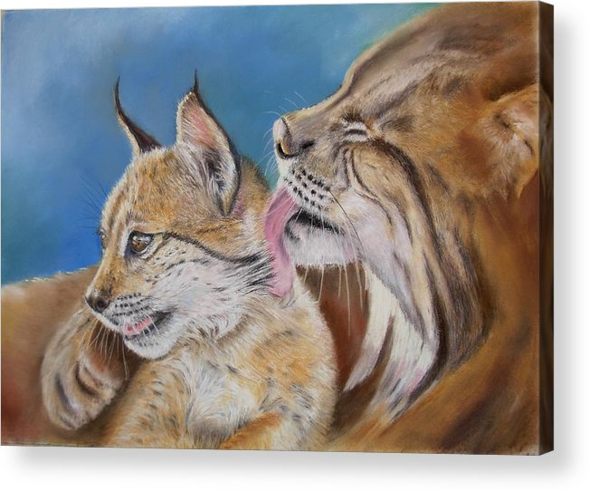 Iberian Lynx Acrylic Print featuring the painting Saliega Y Brezo by Ceci Watson