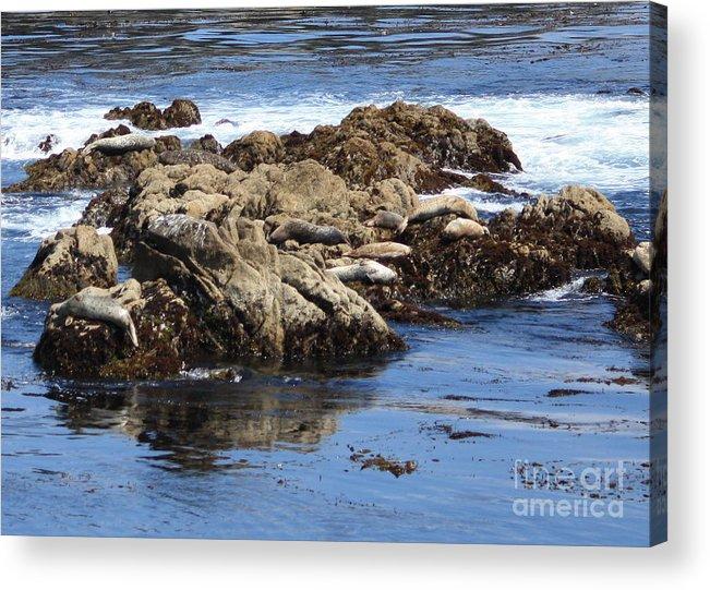 California Coast Acrylic Print featuring the photograph Seal Island by Carol Groenen