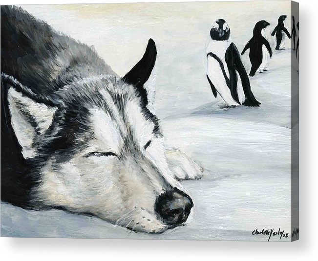 Siberian Huskey Acrylic Print featuring the painting Siberian Huskey by Charlotte Yealey