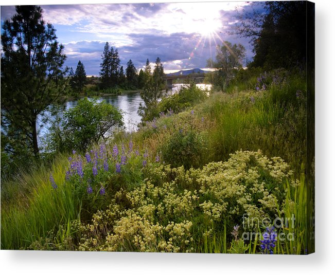 Landscape Acrylic Print featuring the photograph Spokane River Wildflowers by Idaho Scenic Images Linda Lantzy