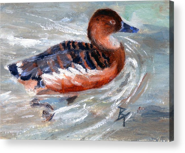 Duck Acrylic Print featuring the painting Swimming Aceo by Brenda Thour
