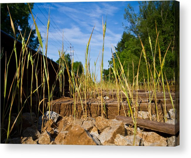 Train Tracks Acrylic Print featuring the photograph Tracks And Weeds by Tim Fitzwater