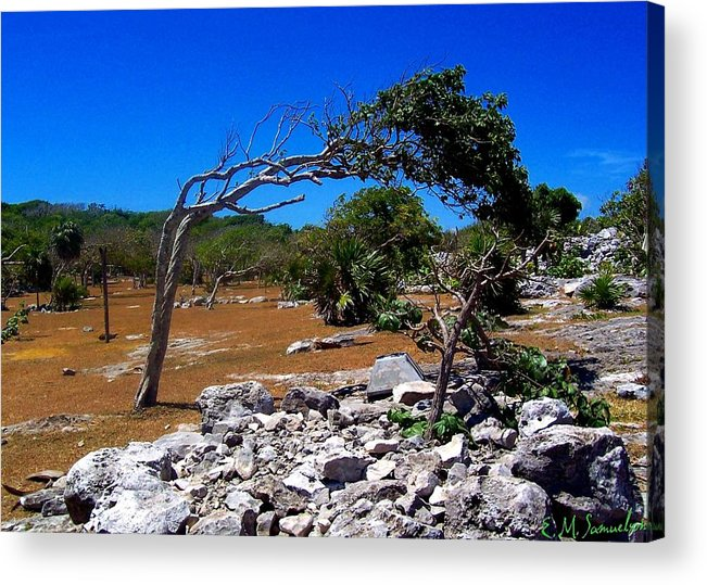 Landscape Acrylic Print featuring the photograph Tree In Tulum by Elise Samuelson