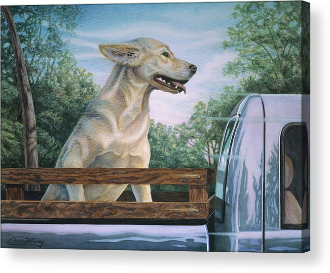 Dog In Truck Acrylic Print featuring the painting Truck Queen by Craig Gallaway