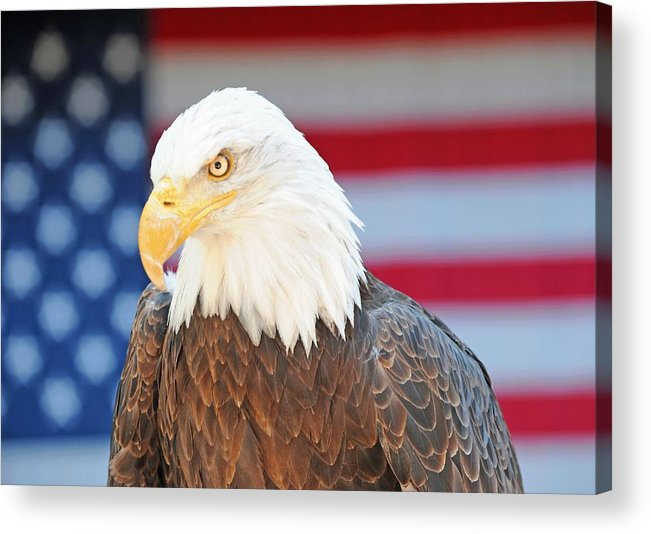 Eagle Acrylic Print featuring the photograph Typicus Libertas by Dennis Hammer