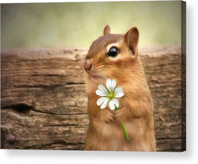 Chippy Acrylic Print featuring the photograph Welcome Spring by Lori Deiter