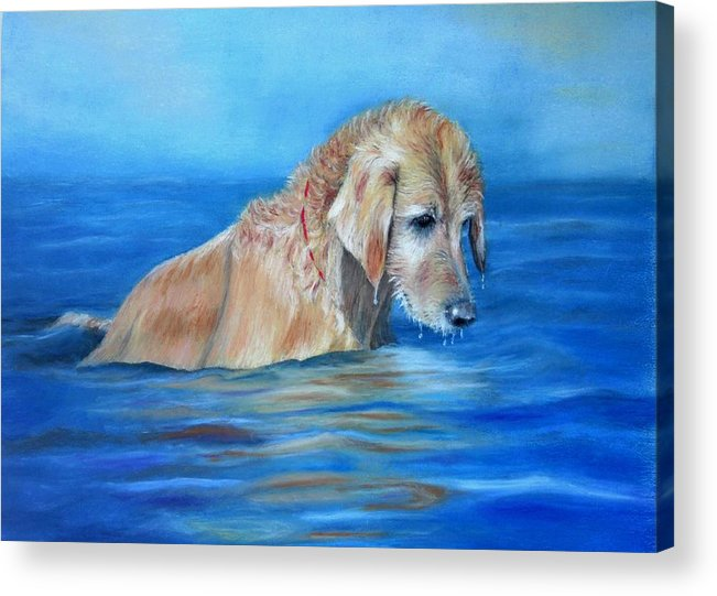 Golden Retriever Acrylic Print featuring the painting Wet Godden Retriever by Ceci Watson