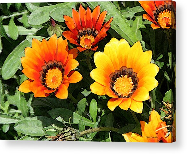Flowers Acrylic Print featuring the painting Who Gets The Attention by Diana Gonzalez