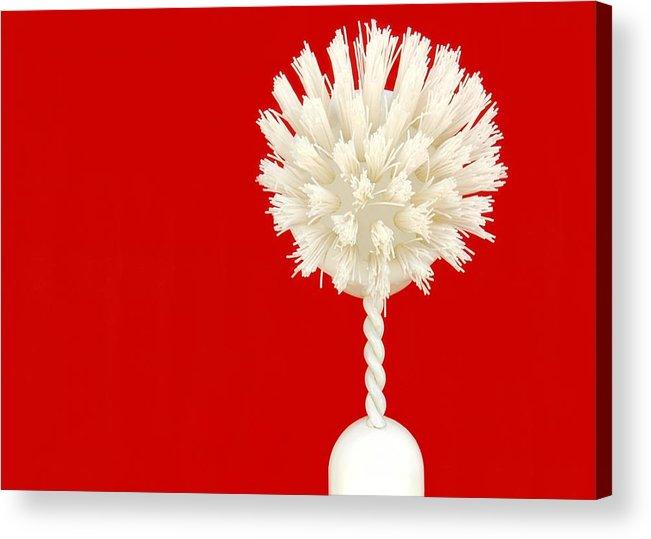 Brush Acrylic Print featuring the photograph Scrub Brush by Dan Holm