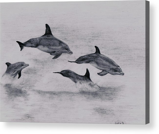 Dolphin Acrylic Print featuring the drawing Dolphins by Lucy D