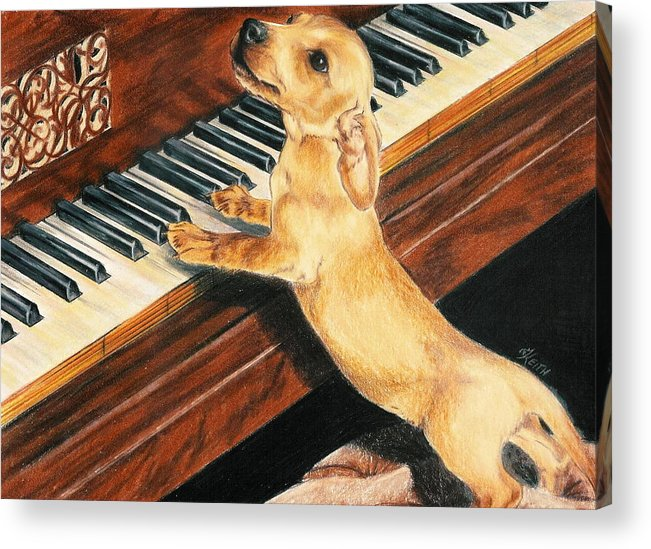 Dogs Acrylic Print featuring the drawing Mozart's Apprentice by Barbara Keith