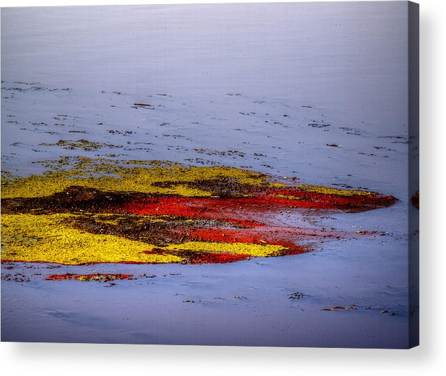 Algae Acrylic Print featuring the photograph Psychedelic Algae by Thomas Young