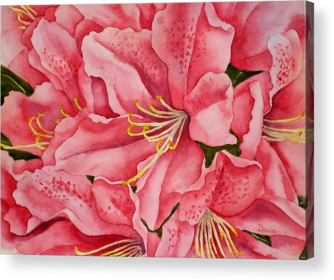 Watercolor Acrylic Print featuring the painting Spring Azalea by Darla Brock