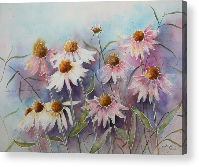 Floral Acrylic Print featuring the painting White And Pink Coneflowers by Patsy Sharpe