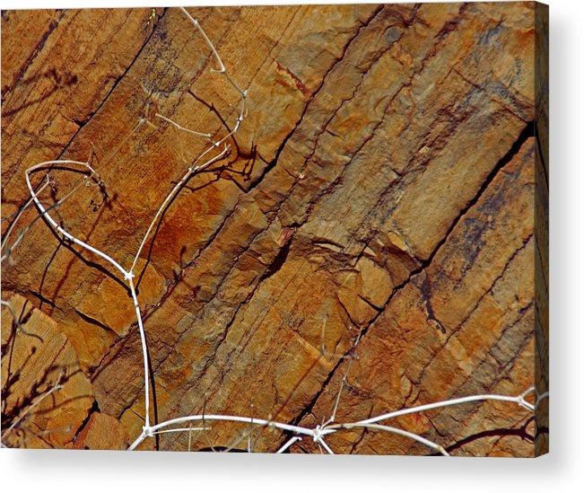 Rust Acrylic Print featuring the photograph Against Rock by Lynda Lehmann