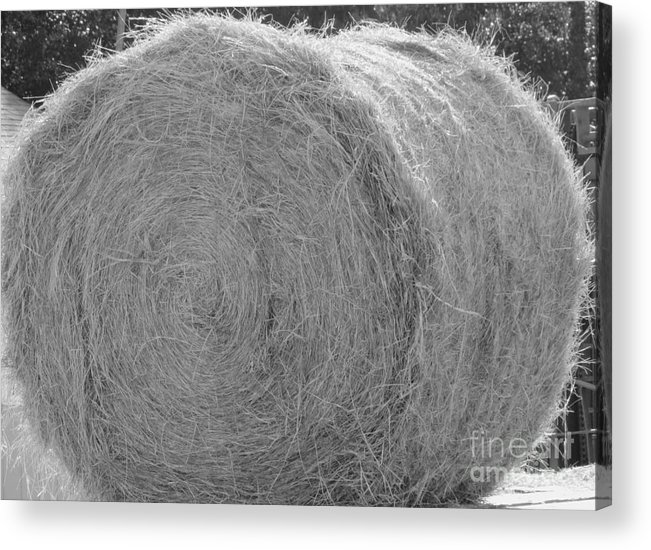 Livestock Acrylic Print featuring the photograph Black And White Hay Ball by Michelle Powell
