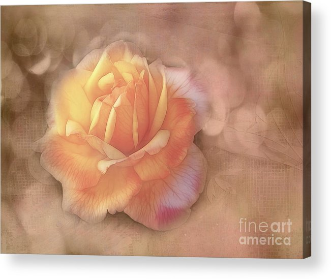 Rose Acrylic Print featuring the photograph Faded Memories by Judi Bagwell